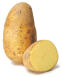 potato variety of Ré Alcmaria