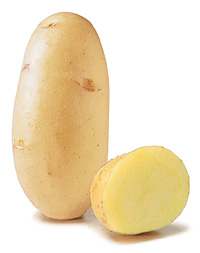 potato variety of Ré Charlotte